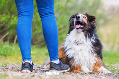 Young woman with a Collie-Mix dog outdoors. Picture of a young woman with a Collie-Mix dog outdoors royalty free stock photos