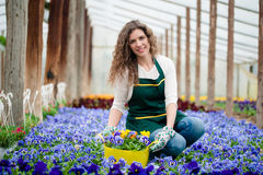 Young woman in a colorful flower garden in a greenhouse picking a flower pot Royalty Free Stock Images