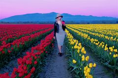 Young woman in colorful tulip fields at sunset. Tulip Festival in Skagit Valley. Mount Vernon. Seattle. WA. United States Royalty Free Stock Image