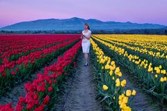 Young woman in colorful tulip fields at sunset. Tulip Festival at Skagit Valley. Mount Vernon. Seattle. WA.  United States Stock Photography
