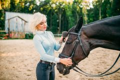 Young woman combing the mane of the horse. Equestrian sport, attractive lady and beautiful stallion Stock Photo
