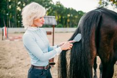 Young woman combing the tail of the horse. Equestrian sport, attractive lady and beautiful stallion Stock Photo
