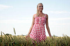Young woman in a corn field Stock Images