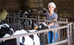 Young woman in the cowshed Royalty Free Stock Photos