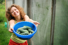 Young woman with crop of cucumbers Stock Image