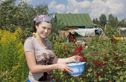 Young woman with crop of red currant in garden . royalty free stock photos