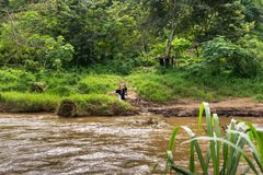 Young woman crossing the river on zip line in Chiang Mai stock images