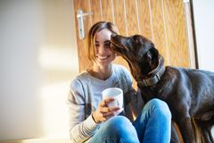 A young woman sitting indoors on the floor at home, playing with a dog. royalty free stock photography