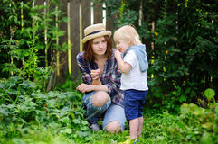 Young woman and cute little toddler boy picking berries in the garden Royalty Free Stock Photography