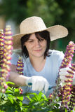 Young woman cutting flowers in her garden Stock Photo