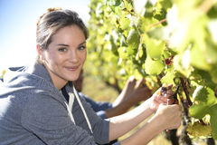 Young woman cutting grapes Royalty Free Stock Image