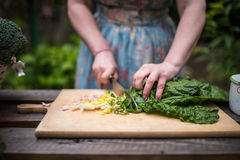 Young woman cutting mangold leaves for a salad Royalty Free Stock Photography