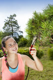 Young woman cutting and pruning the bonsai pine tree Stock Image
