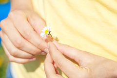 Young woman with daisy. Young woman –only hands to be seen - with daisy Stock Photos