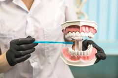 Dentist showing how to clean the teeth. stock images