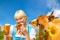 Young woman in a dirndl with happy cow. Young woman with beer and pretzel, in background a cow with sunflower Royalty Free Stock Photography