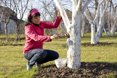 Young woman disinfecting tree Royalty Free Stock Photo