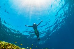 Young woman diving underwater. Happy family - girl dive underwater with tropical fishes in coral reef sea pool. Travel lifestyle, water sport outdoor adventure Royalty Free Stock Photos