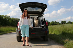 Young woman and a dog at a car Stock Images