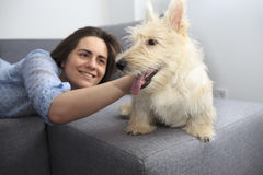 Young woman with a dog at home. Girl in blue shirt playing with white scotch terrier on the flour Royalty Free Stock Images