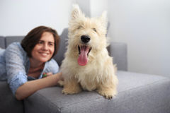 Young woman with a dog at home. Girl in blue shirt and trousers playing with white scotch terrier on the flour Stock Photo