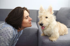 Young woman with a dog at home. Girl in blue shirt and trousers playing with white scotch terrier on the flour Stock Images