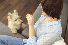 Young woman with a dog at home. Girl in blue shirt and trousers playing with white scotch terrier on the flour Royalty Free Stock Photo