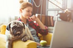 Young woman and dog with laptop . Work at home. Pug. Young woman and dog with laptop. Work at home royalty free stock images