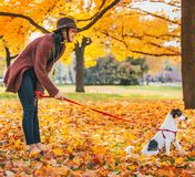 Young woman with dog outdoors in autumn Stock Image
