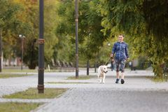 Young woman with dog together in park. Pet care. Young woman with her dog together in park. Pet care Stock Photography