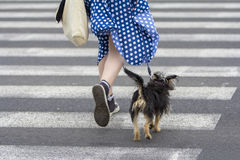 Young woman with dog walking Stock Image