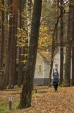 Young woman, exercise, nature, autumn, lifestyle, forest. stock image