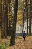 Young woman, exercise, nature, autumn, lifestyle, forest. Young woman doing exercises in the fresh air. Outdoor.The recreation center in the deciduous forest stock photos