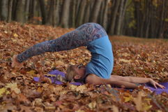 Young woman doing yoga asanas in autumn forest. Halasana. Young blond woman doing asanas in autumn forest. Name of asana is Halasana Stock Photo