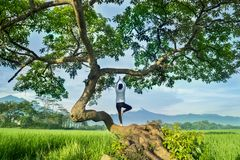 Young woman doing yoga exercise on a tree royalty free stock photos