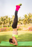 Young woman doing yoga in morning park Stock Photography
