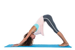 Young woman in downward facing dog position Stock Image