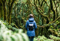 Young woman enjoy nature in laurel forest. Travel concept. Anaga Country Park, Biosphere Reserve, Tenerife, Canary islands stock photos