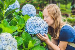 Young woman enjoying the scent of hydrangea. Girl resting near a bush hydrangea. Hydrangea.  stock photos