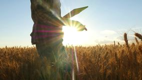 Young woman farmer in wheat field on sunset background. A girl plucks wheat spikes, then uses a tablet. The farmer is royalty free stock images