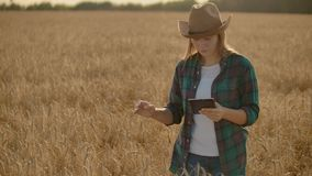 Young woman farmer working with tablet in field at sunset. The owner of a small business concept.  stock footage