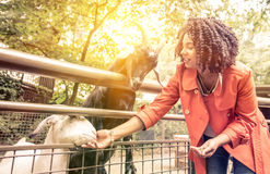 Young woman feeding animals at the zoo. Royalty Free Stock Image