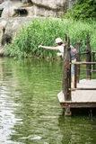 Young woman feeding aquatic animals Stock Photos
