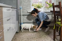 Young woman feeding dog. Housewife with dog jack russell Royalty Free Stock Photo