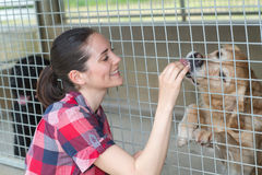 Young woman feeding dog on street Stock Images