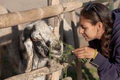 Young woman feeding a goat in safari park. Stock Photos