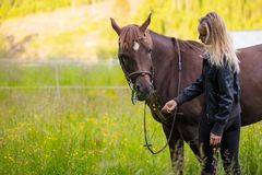 Woman feeding her arabian horse with snacks in the field Royalty Free Stock Images