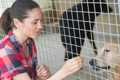 Young woman feeding dog on street Royalty Free Stock Photos