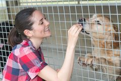 Young woman feeding dog on street Royalty Free Stock Images
