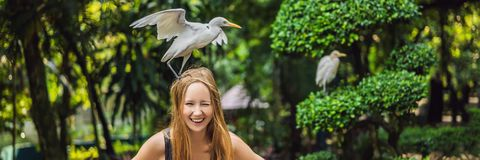 Young woman feeding ibes in the park. Little Egret Cattle egret Bubulcus ibis Waters Edge BANNER, LONG FORMAT. Young woman feeding ibes in the park Little Egret stock images